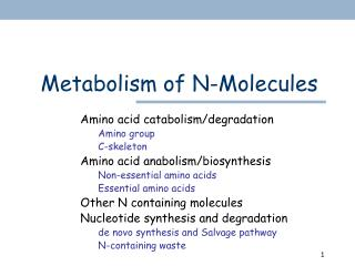 Metabolism of N-Molecules