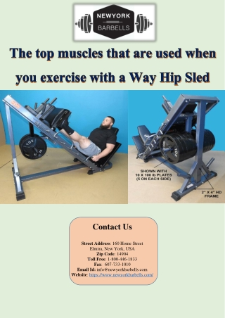 The top muscles that are used when you exercise with a Way Hip Sled