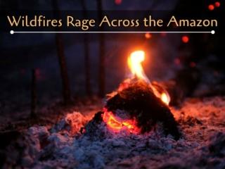 Wildfires rage across the Amazon