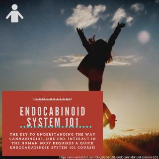 Endocannabinoid System 101 | Elemental CBD