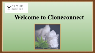 Smokable CBD Hemp Flower at Affordable Price | Clone Connect
