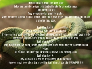 Intriguing Facts About The Bush Viper
