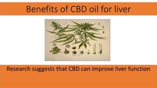 CBD oil is Beneficial for liver Researchers Said