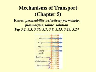 cell transport mechanisms and permeability 2 essay Exercise 1: cell transport mechanisms and permeability zao ch 01-1 activity 1: simulating dialysis (simple diffusion) (pp 4–6) 1describe two.