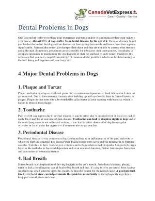Dental Problems in Dogs