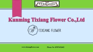 Fresh Flowers - Fresh Flowers Wholesale