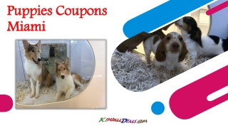 Puppies Coupons Miami
