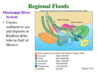 Mississippi River System Carries sediment to sea and deposits in Birdfoot delta lobe in Gulf of Mexico