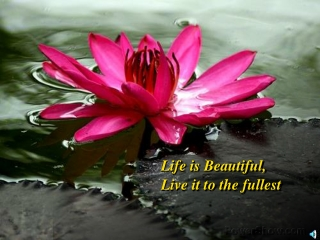 Life is Beautiful, Live it to the fullest