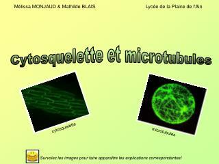 Cytosquelette et microtubules