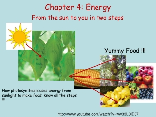 1. Glucose contains more energy than the products of its metabolism, CO2 and H2O.            True           False