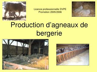 Production d'agneaux de bergerie