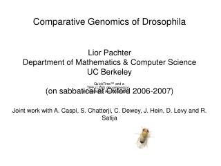 Comparative Genomics of Drosophila   Lior Pachter Department of Mathematics  Computer Science UC Berkeley  on sabbatical