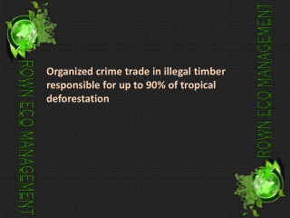 Organized crime trade in illegal timber responsible for up t