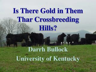 Is There Gold in Them Thar Crossbreeding Hills?
