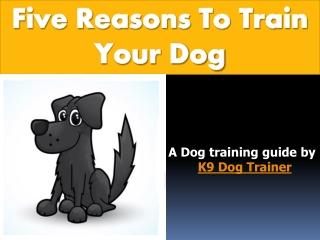 K9 Dog Trainer
