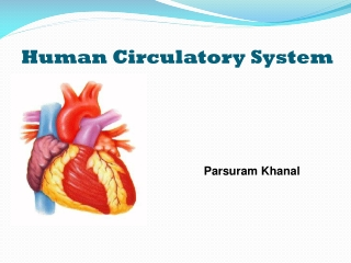 Chapter 18 The Circulatory System: Blood