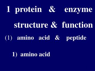 1  protein   &    enzyme                    structure &  function