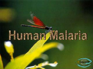 Human Malaria