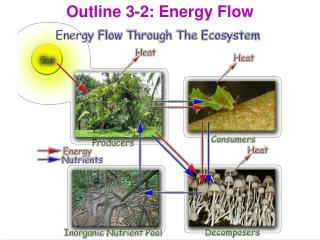 Outline 3-2: Energy Flow