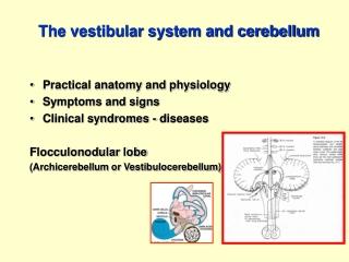The vestibular system and cerebellum