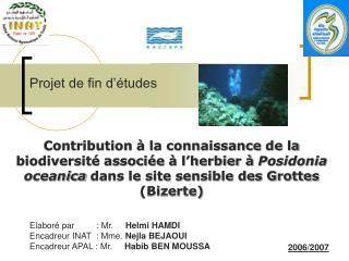 Contribution à la connaissance de la biodiversité associée à l'herbier à  Posidonia oceanica  dans le site sensible des