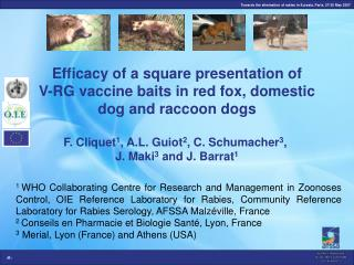 Efficacy of a square presentation of  V-RG vaccine baits in red fox, domestic dog and raccoon dogs