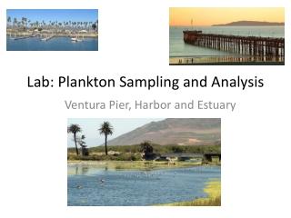 Lab: Plankton Sampling and Analysis