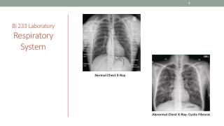 BI 233 Laboratory Respiratory System