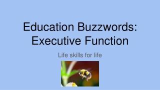 Education Buzzwords: Executive Function