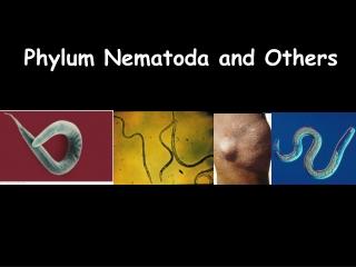 Phylum Nematoda and Others