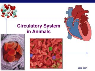 Circulatory System in Animals