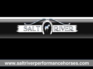 Saltriver Performance Horses Training Facilities