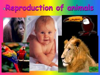 Reproduction of animals