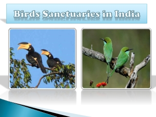 Bird Sanctuaries in India
