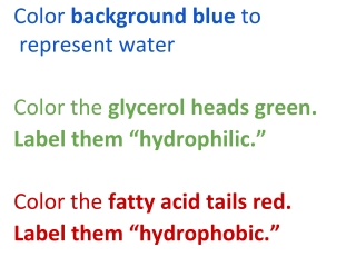 Color background blue to represent water Color the glycerol heads green.