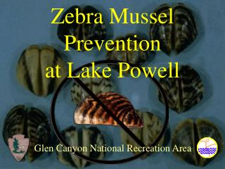 Zebra Mussel Prevention at Lake Powell