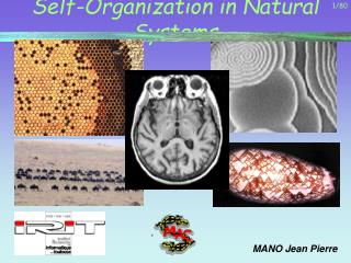 Self-Organization in Natural Systems