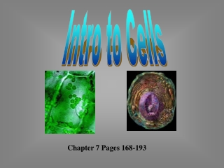 Chapter 7 Pages 168-193