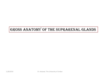 Gross Anatomy of the suprarenal glands