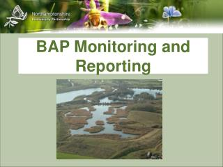 BAP Monitoring and Reporting