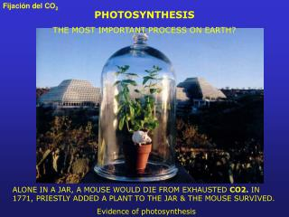 PHOTOSYNTHESIS  THE MOST IMPORTANT PROCESS ON EARTH?