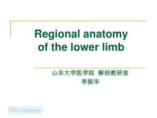 Regional anatomy  of the lower limb