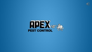 Professionals For Spider Control And Removal Service