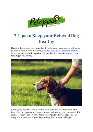 7 Tips to Keep your Beloved Dog Healthy
