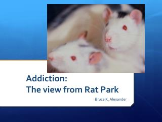Addiction:  The view from Rat Park