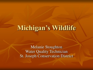 Michigan's Wildlife