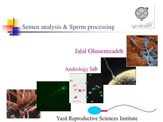 Semen analysis & Sperm processing