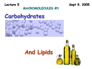 Lecture 5  						Sept 9, 2005 MACROMOLECULES #1
