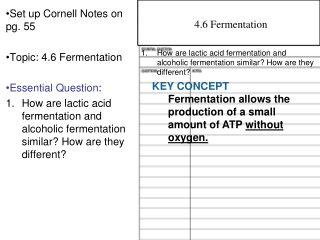Set up Cornell Notes on pg. 55 Topic: 4.6 Fermentation Essential Question :